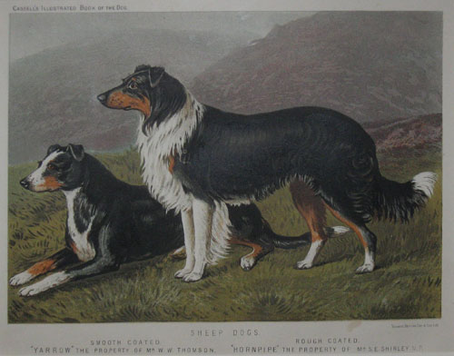 (NATURAL HISTORY). Sheep Dogs Smooth Coated Rough Coated… [Shaw. 'The Illustrated Book Of The Dog'. London: c1890].