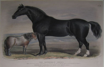 (NATURAL HISTORY). SHIELS & NICHOLSON. The Clysdale Breed…London Published April 1841, by Longman, Brown, Green & Longman [Low. 'Breeds of the Domestic Animals'].